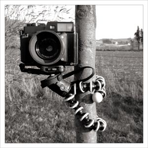 Animal photographique